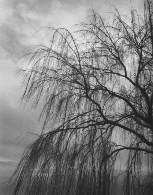 Olive Cotton (Australian, 1911-2003) 