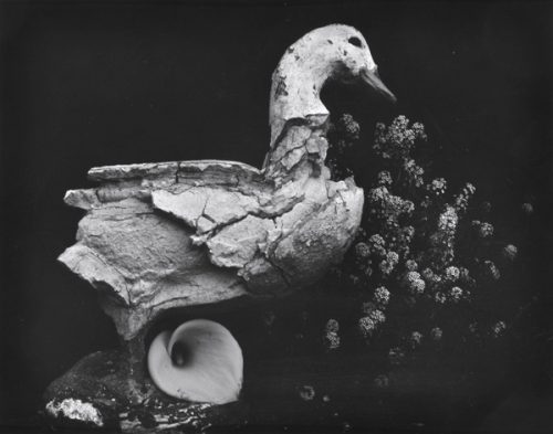 Edward Weston (American, 1886-1958) Duck and Lily 1939