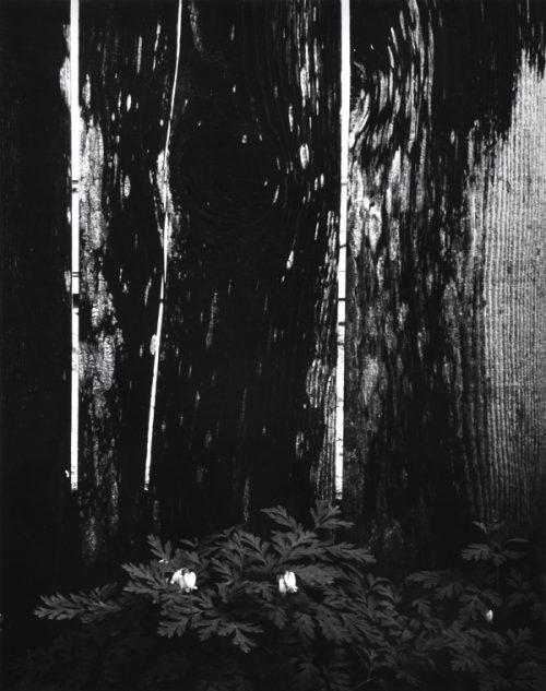 Ryuijie Douglas (Japanese Born-1950), Dark Forest