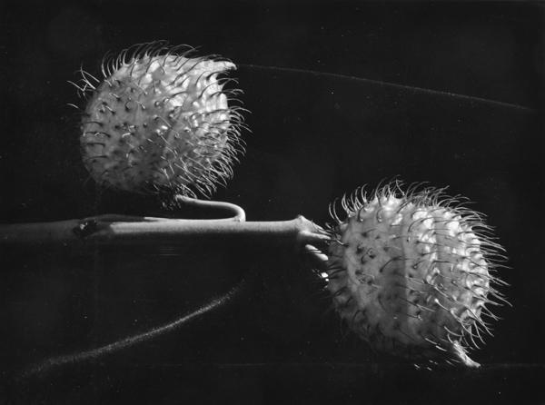 Ryuijie Douglas (Japanese, Born 1950) Flower Study