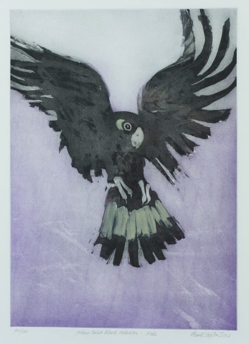 Frank George (1919-2001), Yellow-tailed Black Cockatoo - Male
