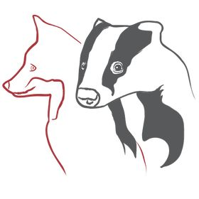 Badger and Fox Gallery